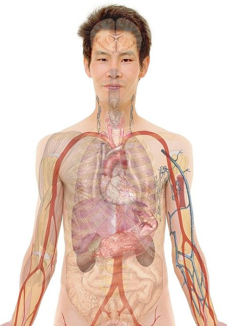 Hvad er fysioterapi?